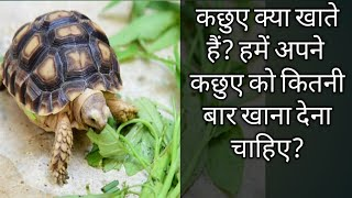 Tortoise kya khata hain ? What should we feed to our turtle? Flora And Fauna