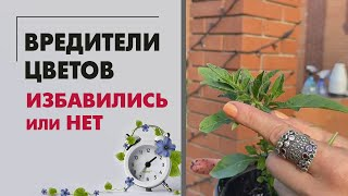 Вредители цветов - избавились или нет. Обзор крыльца