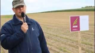 Technologia rzędowego nawożenia kukurydzy wg ADOB PPC