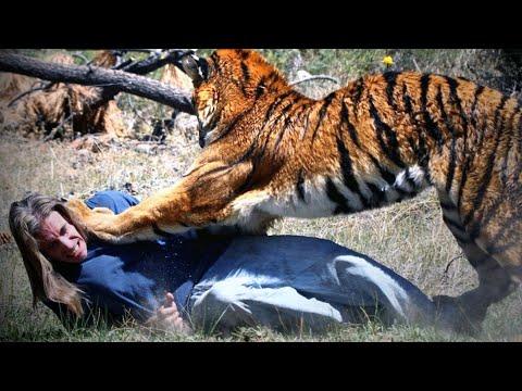 The Disturbing Psychology of a Man-Eating Tiger