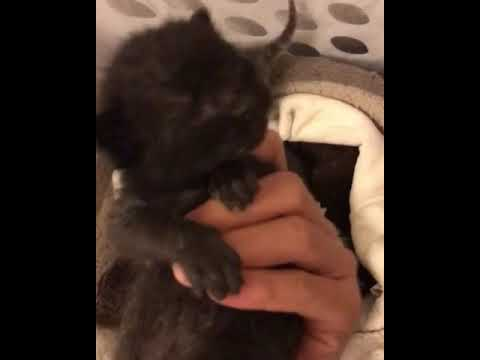 Crying Kittens