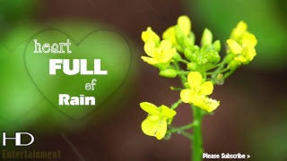 Heart Full Of Rain ♥ Beautiful Piano Music With Rain Sound ♥ Sleep Music With Piano and Rain
