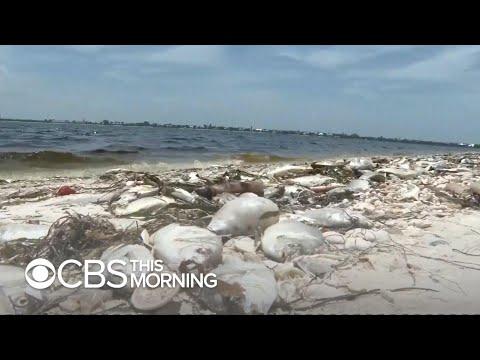 Toxic red tide poses threat to residents near Florida's Atlantic coast