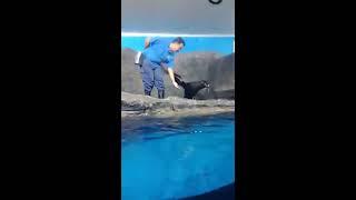 Seal show in Underwater World Langkawi