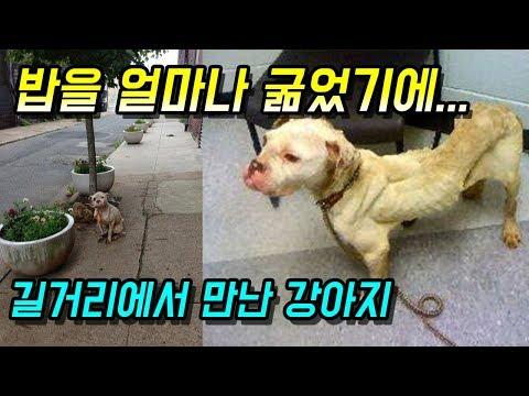 [감동]우체부가 길거리에서 구한 강아지의 눈물나는 사연 - 감동바다