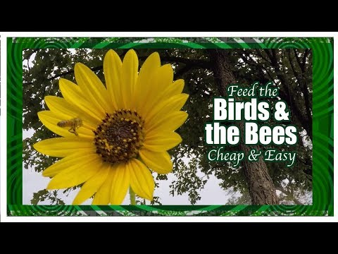Support the Birds & the Bees
