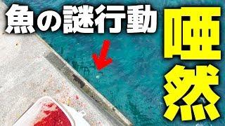 ヒットした魚をファイト中に、魚がとんでもない行動を…!? EP1 https://youtu.be/93JHhvoxYb8 EP2 https://www.youtube.com/watch?v=z6JcZ07qyFE EP3 ...