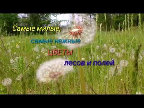Цветы лесные,  полевые - царство цветения... /  начало  июня 2019/