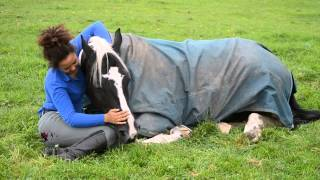 Cuddles with cow lying down