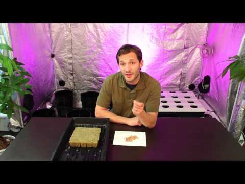 How to Germinate Seeds for Hidroponics   How To grow Indoor Plants