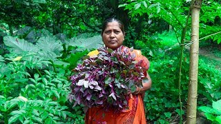 Village Food: Red Spinach Fried Recipe (Amaranthus Dubius) Village Cooking
