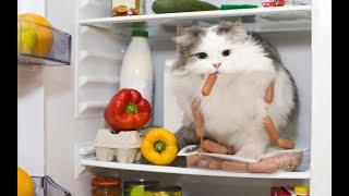 😸 Ох уж эти кошки🐈 Подборка приколов с котами для хорошего настроения 😸