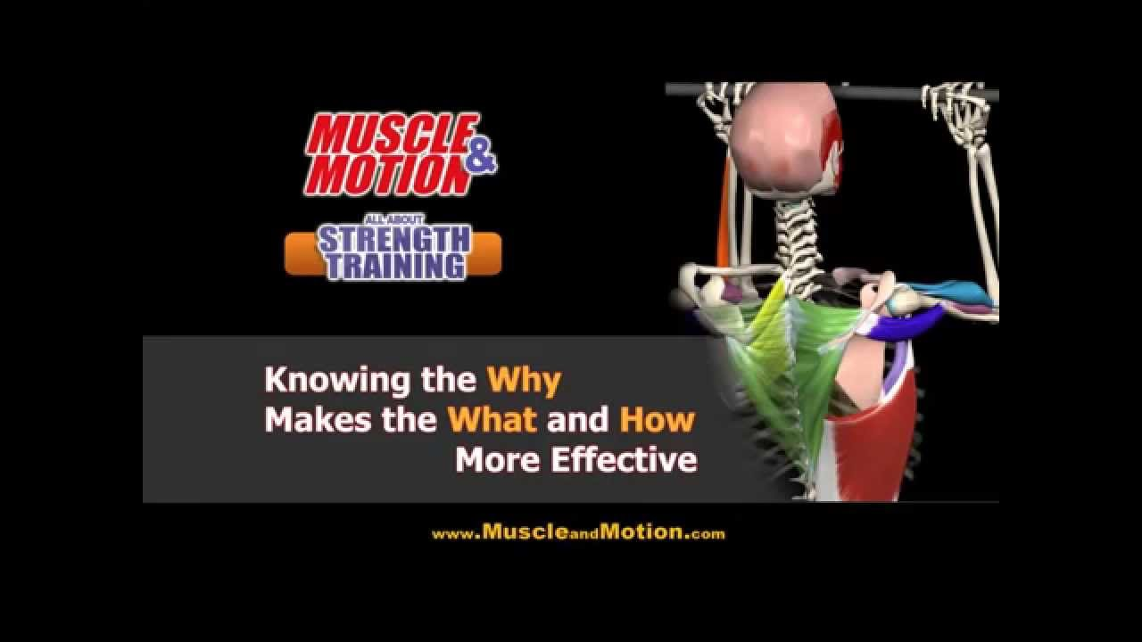 Strength Training Anatomy | Stretching Anatomy - YouTube