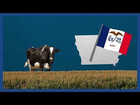 What are the Iowa caucuses? | Guardian Animations