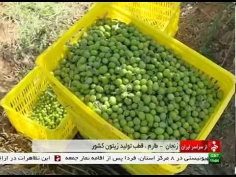 Iran Zanjan province, Olive & Olive oil products محصولات زيتون و روغن زيتون استان زنجان ايران