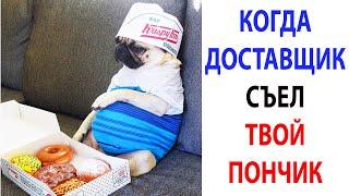 Мемы 2021 года  Новые мемчики с Собаками за 10 октября  Подборка мемов про собак #shorts