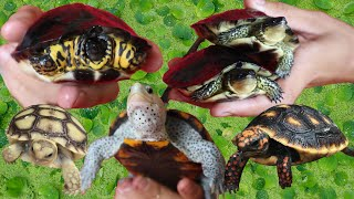 Rare! Cute Colorful Baby Turtles!