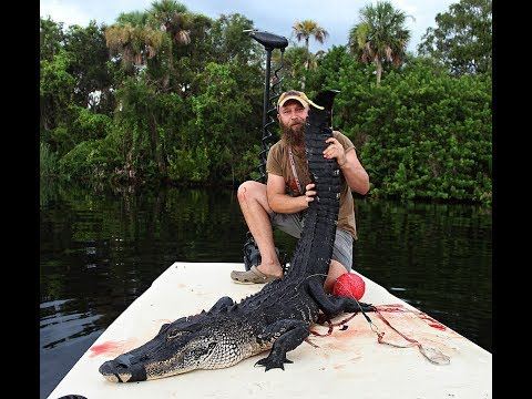 Florida Alligator Public Land Hunt DIY