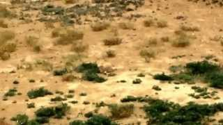 Луговые собачки(via YouTube Capture., 2014-07-04T20:46:00.000Z)