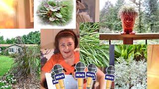 Мой сад в Америке. Видео блог № 21