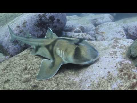 Dive Shark Point, Sydney, Australia, October 2013