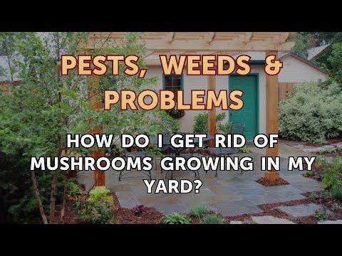 How Do I Get Rid of Mushrooms Growing in My Yard? - YouTube