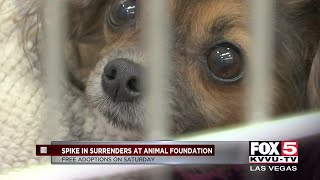 Spike in animals for adoption