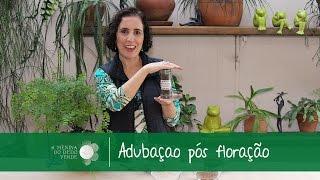 Tutorial: Fertilizante para plantas pós floração/After flowering fertilizer - A Menina do Dedo Verde
