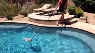 "Scottsdale Dog Training ""k9katelynn"" Teaches ""cali""(westie) How To Swim  Pool W/o Client Getting Wet"
