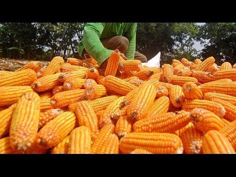 Obama signs 'Dark Act' GMO labeling bill into law