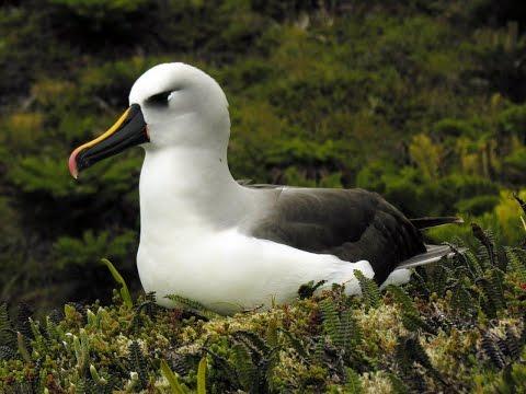 Tristan da Cunha - wildlife and heritage
