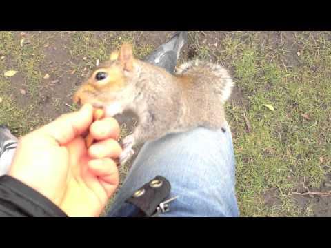 Squirrel feeding Hyde Park London