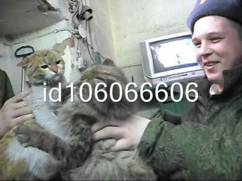 видео: Челябинская область,город Троицк