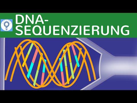 DNA - Sequenzierung - Kettenabbruchmethode nach Sanger einfach ...