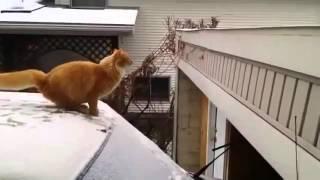 Видео для детей  Коты рулят