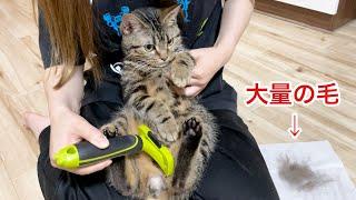 ファーミネーターで大量の抜け毛を刈り取られてしまった猫w
