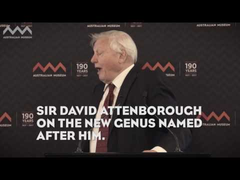 Attenborough on Attenborougharion rubicundus at the Australian Museum