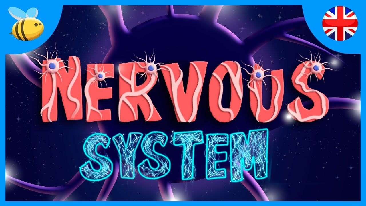 The Nervous System Educational Videos For Kids Youtube