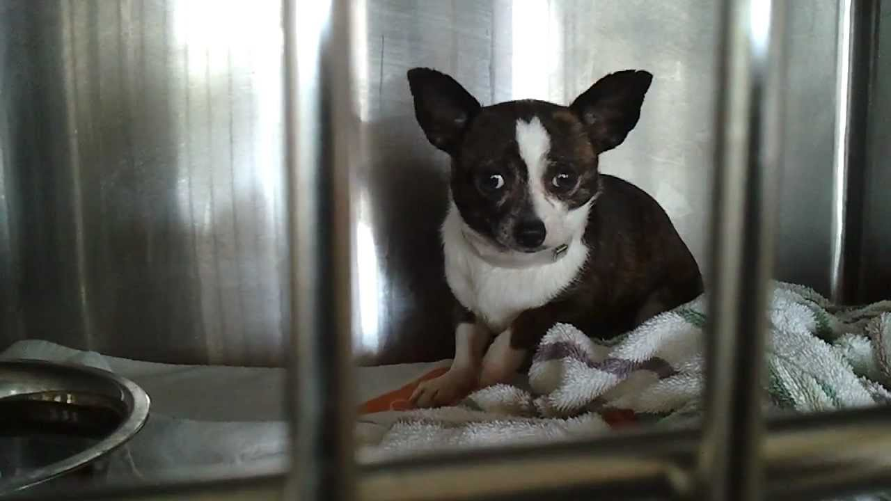 cute, Shaking, scared, shy shelter dog