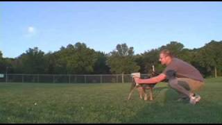 Minnesota's Fastest Dog Competition