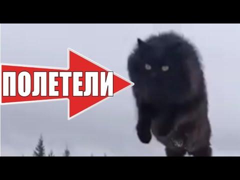 Летающий кот Чернуха умные животные / Flying cat smart animals