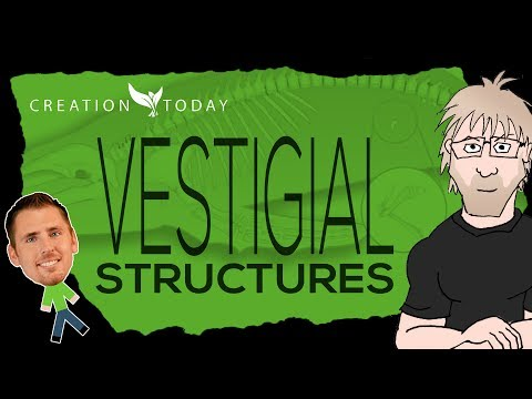 Vestigial Structures - Creation Today Claims