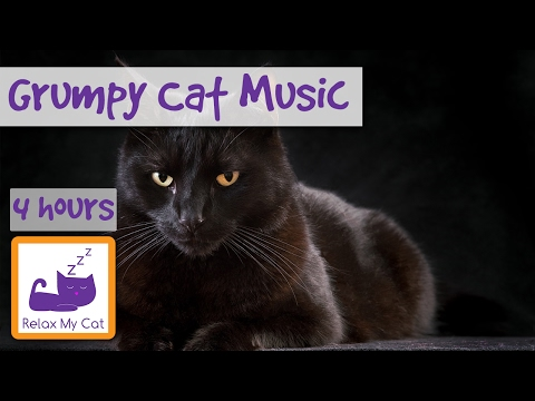 4 Hours of Music for Aggressive Cats, Music for Antisocial Cats and Kittens, Music for Grumpy Cat