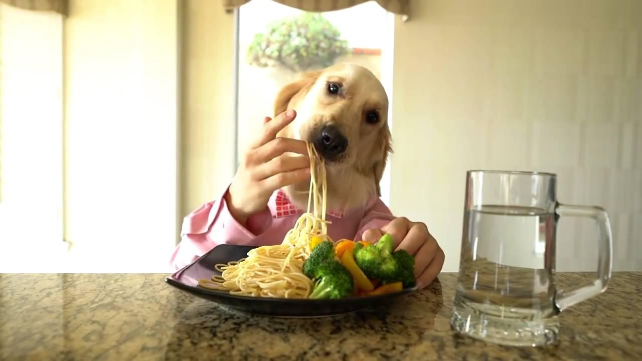 странно, гифка с собака с едой роза цветок