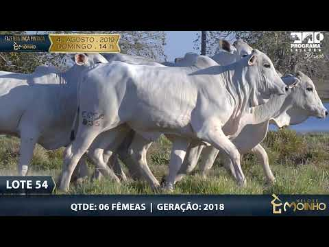 LOTE 54
