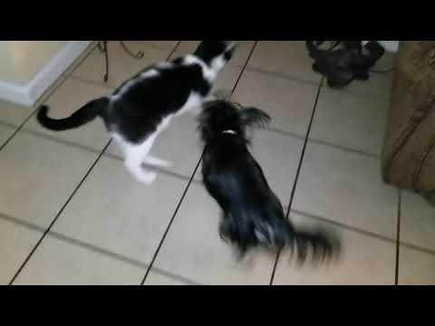 Molly the Dog vs Rin the Cat