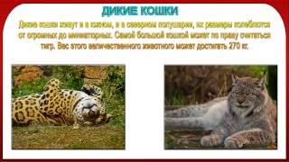 Презентация дикие и домашние животные 1 класс