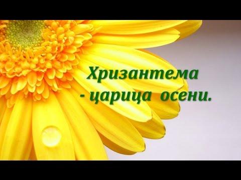 Цветы хризонтемы- символ долголетия.