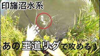 【バス釣り】初夏の手賀沼・印旛沼水系でバス釣り