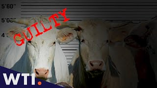Eat Meat From Animals That Deserved to Die | We The Internet TV